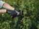 zakupy, narzędzia ogrodowe