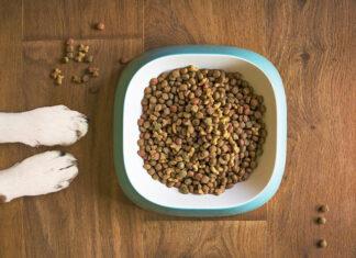 karma dla psiaka